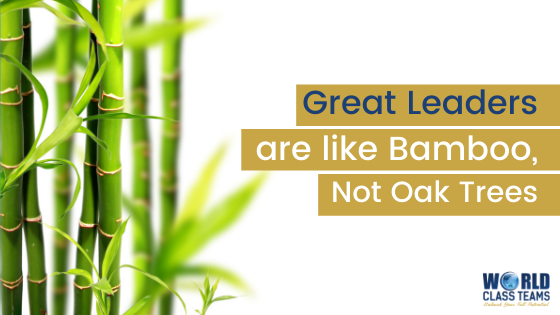 Great Leaders are Like Bamboo